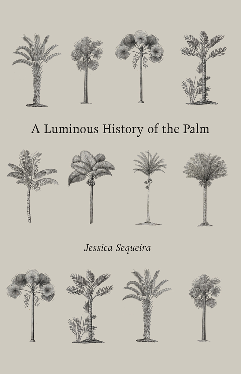 A Luminous History of the Palm