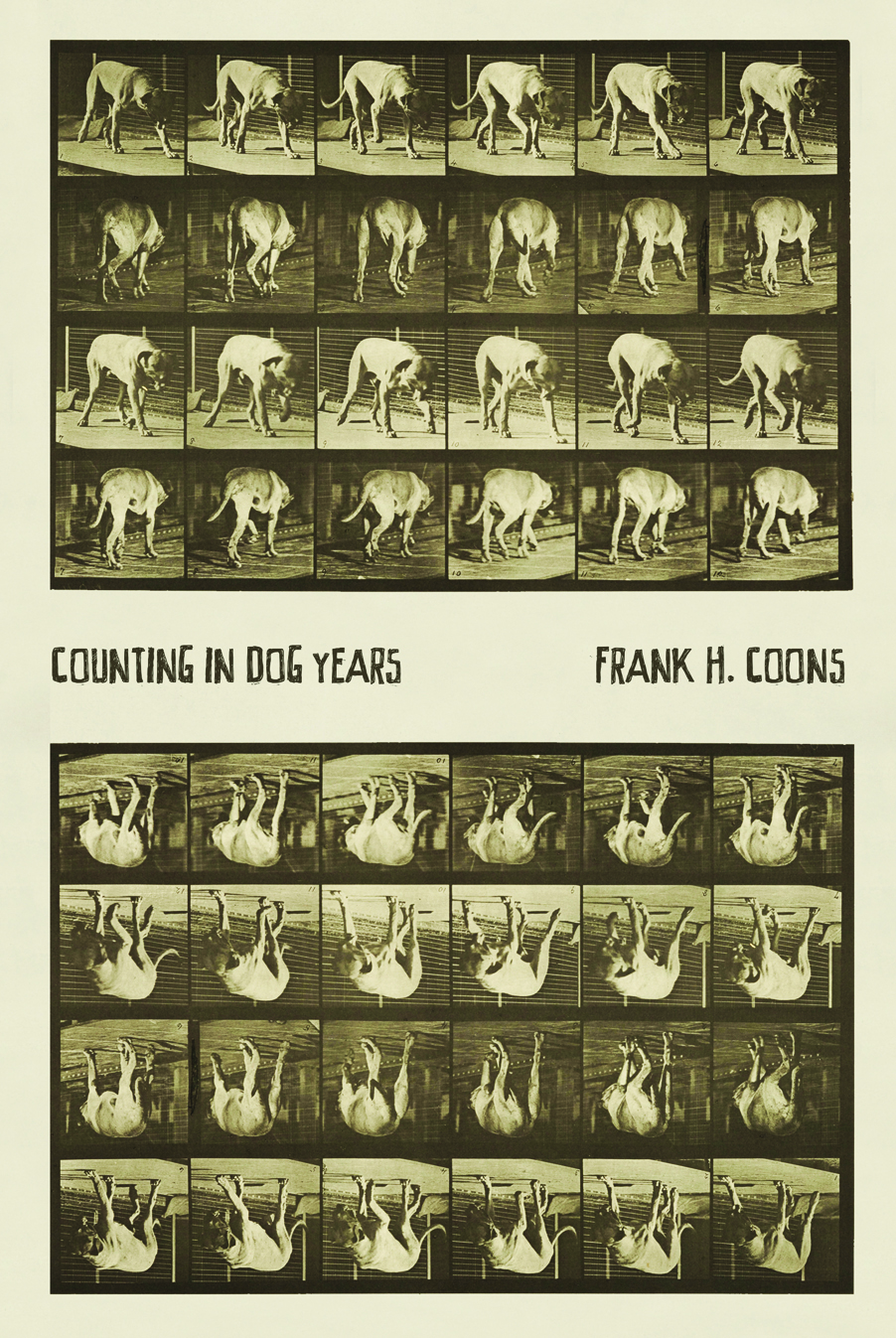Counting In Dog Years